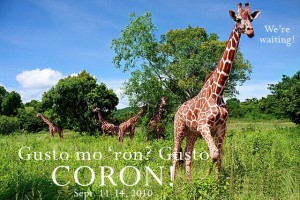 Coron Giraffes awaiting